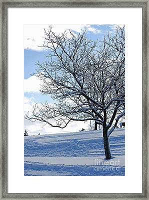 Framed Print featuring the photograph Winter Tree by Lila Fisher-Wenzel