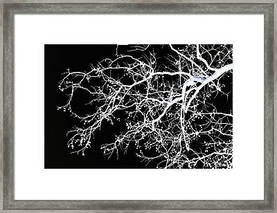 Winter Tree No. 69-2 Framed Print by Sandy Taylor