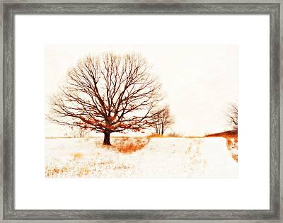 Winter Tree Framed Print by Randy Steele