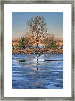 Winter Tree - Walnut Creek Lake Framed Print by Nikolyn McDonald