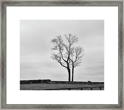 Winter Trees And Fences Framed Print by Nancy De Flon