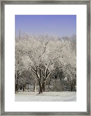 Framed Print featuring the photograph Winter Trees by Diane Merkle