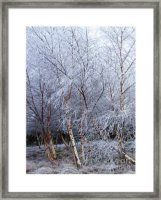 Framed Print featuring the photograph Winter Trees by Jacqi Elmslie
