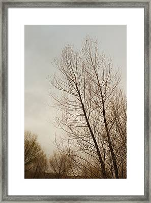 Winter Trees Framed Print by Joseph Smith