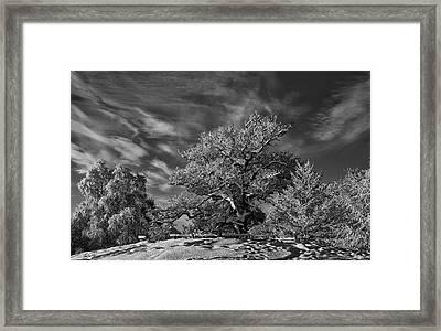 Winter Trees Framed Print by Mark Denham