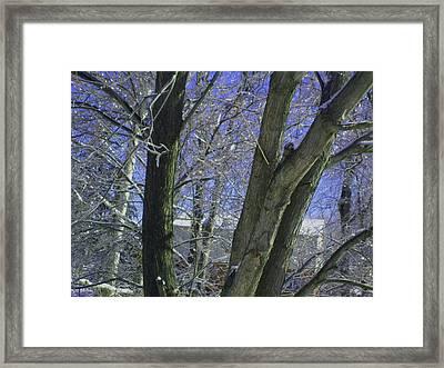 Winter Trees Framed Print by Misty VanPool