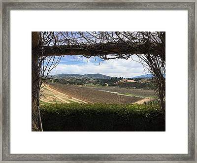 Winter Vines Framed Print