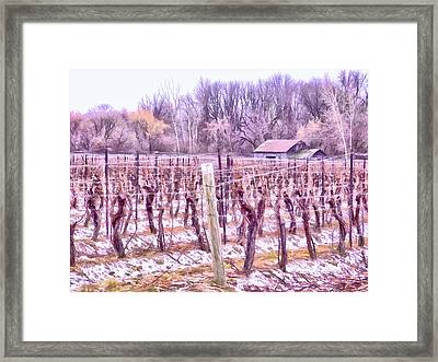 Winter Vineyards - Niagara Region Framed Print by Leslie Montgomery