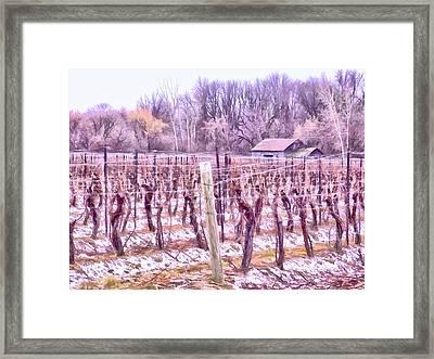 Winter Vineyards - Niagara Region Framed Print