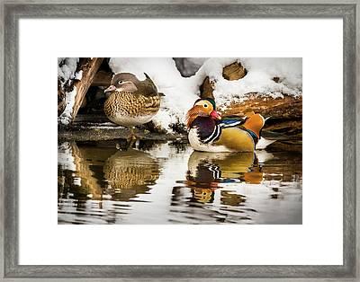 Winter Visitors - Mandarin Ducks Framed Print
