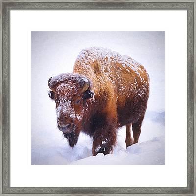 Winter Walk Framed Print by Greg Norrell