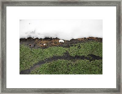 Winter Watercress Framed Print