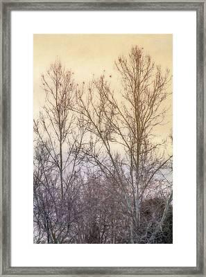 Winter Whisper In The Trees Framed Print