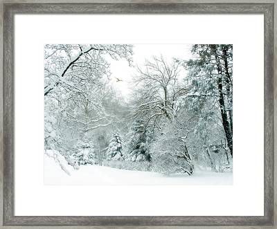 Winter Whisper Framed Print