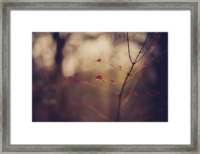 Winter Whispers Framed Print
