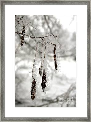 Winter White And Brown Framed Print by Carol Groenen