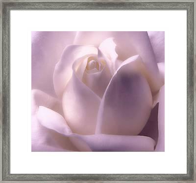 Winter White Rose 2 Framed Print