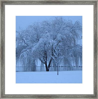 Winter Willow Tree Before Dawn_fort Worth_tx Framed Print