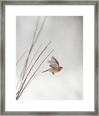 Winter Wind Surfing 1 Framed Print