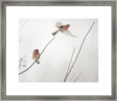 Winter Wind Surfing 2 Framed Print