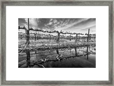 Winter Wine Framed Print by Scott Campbell