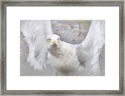 Winter Wings Framed Print