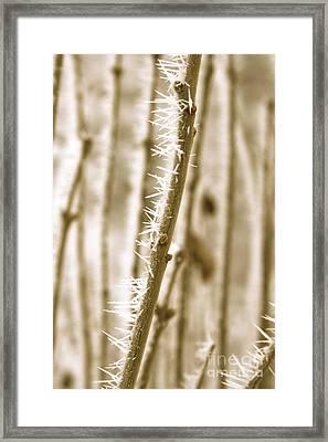 Winter Wonder Hoarfrost Framed Print by Carol Groenen