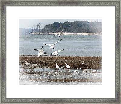 Winter Wonders 1 Framed Print