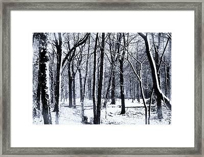Winter Woodland Framed Print by Martin Newman