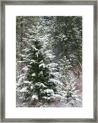 Framed Print featuring the photograph Winter Woodland by Will Borden