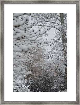Winter Woodlands Framed Print