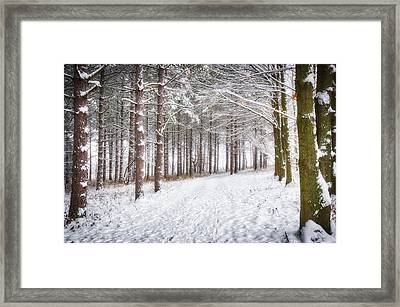 Winter Woods And Path -  Retzer Nature Center  Framed Print