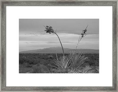Winter Yucca Framed Print