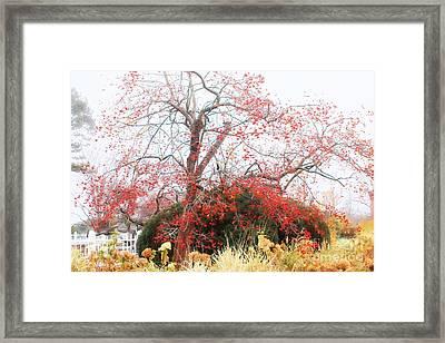 Winterberry Tree Framed Print