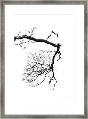 Wintered Over Framed Print by Skip Willits