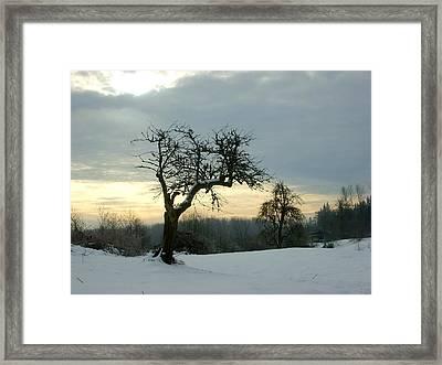 Wintergloom Framed Print