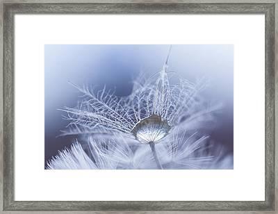 Wintermint Framed Print by Elena E Giorgi