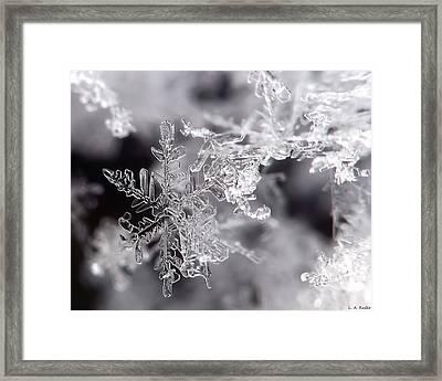 Winter's Beauty Framed Print