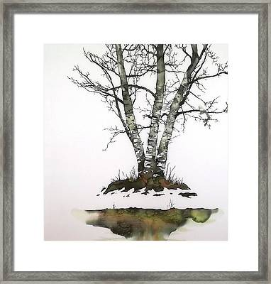 Winters Birch Framed Print by Carolyn Doe