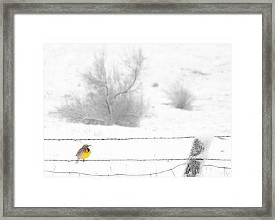 Framed Print featuring the photograph Winters Color by Al Swasey
