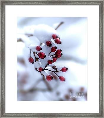 Winter's Color Framed Print