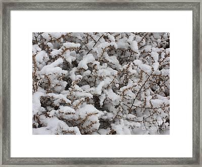 Winter's Contrast Framed Print by Carol Groenen