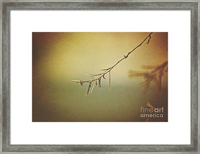 Winter's Decay Framed Print
