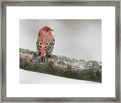 Winter Glance Framed Print