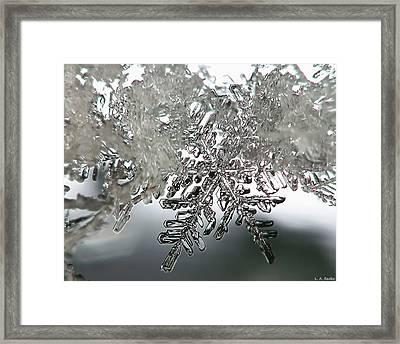 Winter's Glory Framed Print