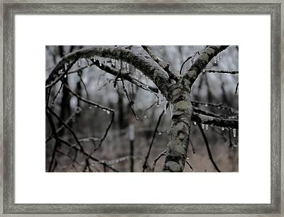 Winter's Grip Framed Print
