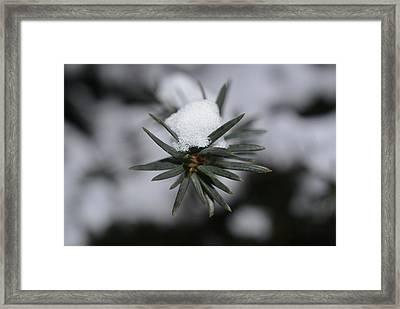 Winter's Grip Framed Print