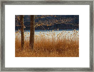 Winters Life Framed Print by Karol Livote