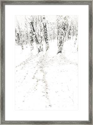 Framed Print featuring the photograph Winter's Shadows by The Forests Edge Photography - Diane Sandoval