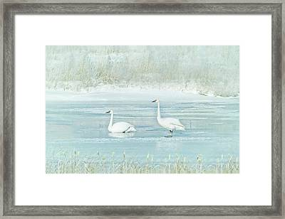 Framed Print featuring the photograph Trumpeter Swan's Winter Rest Blue by Jennie Marie Schell